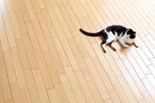 ペットの健康を守るためには床材選びがポイント!