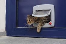 快適生活に欠かせない!ペットドアで犬や猫に自由を!