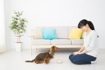マンションでペットを飼う人増加中!気を付けたいこととは?