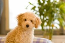 犬と住む家のリフォームを考える